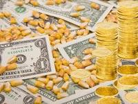 תירס חקלאות סחורות דולרים זהב / צילום: photo to go